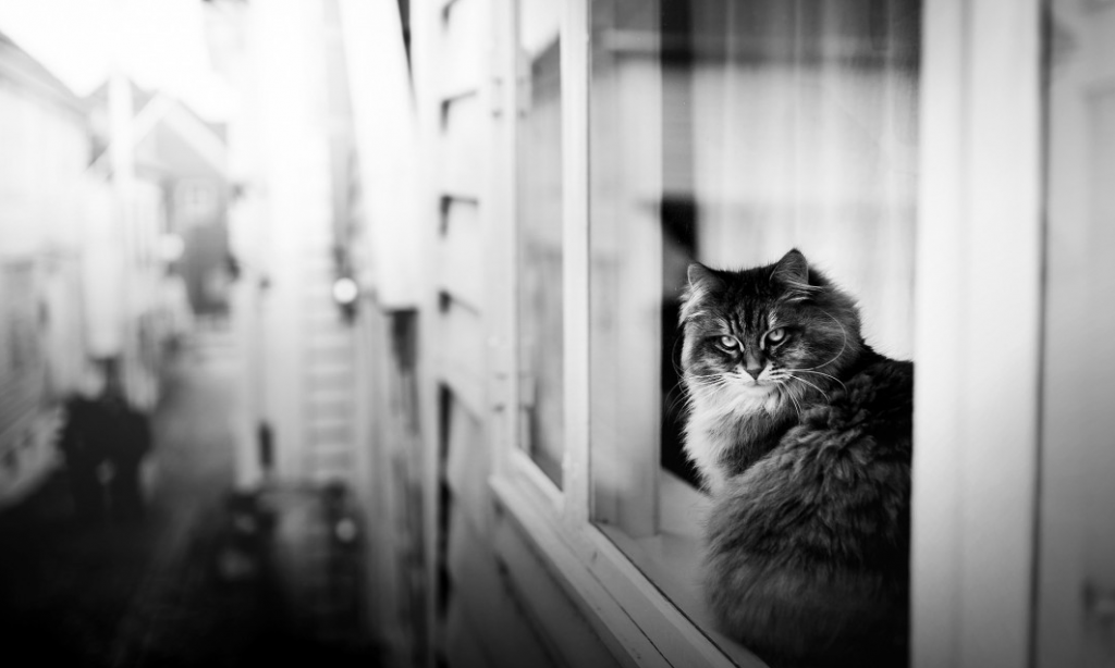Alicja Zmyslowska   Cat Competition Winner