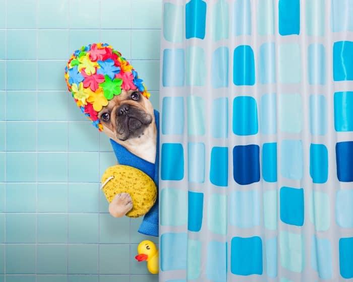 shower curtain diy photography backdrop