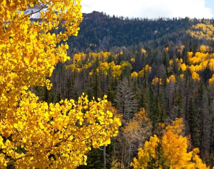 yellow leaf tree photography