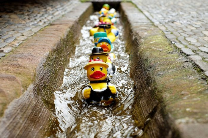 rubber duckies in a stream